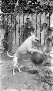 800px-Dog_Leaping